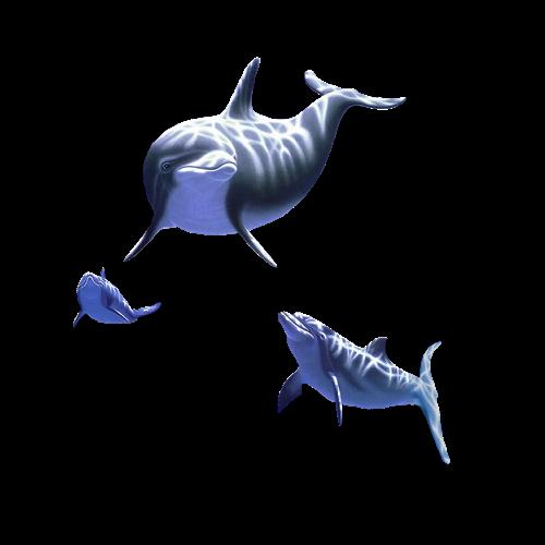 dolfijnen.png | Tubes design: tubesdesign.clubs.nl/foto/detail/7445012_dolfijnenpng